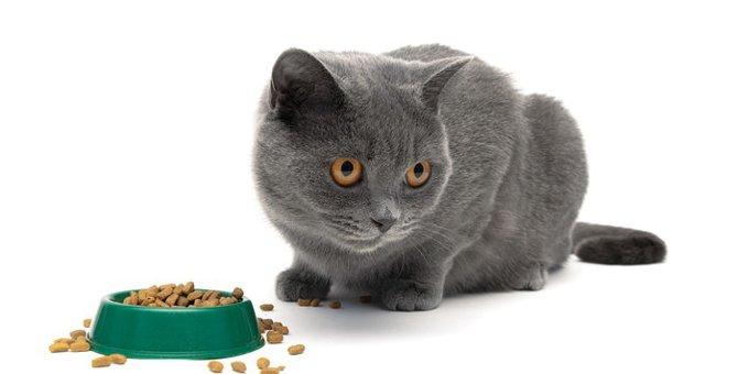 猫がごはんを食べない原因と対処方法