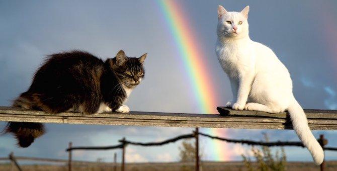 猫が亡くなったら辿り着く『虹の橋』ってどんな所?
