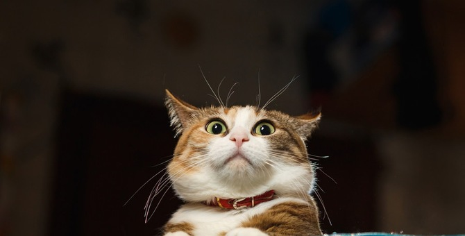 猫の嫌いな音4つ!しつけや撃退に使えるアプリとその注意点