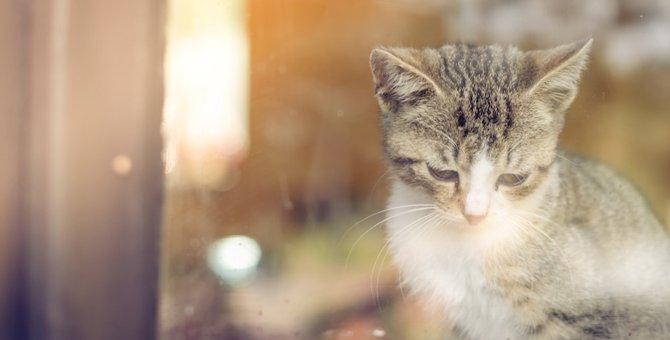 猫が悲しくてしょんぼりしている時にする5つの仕草