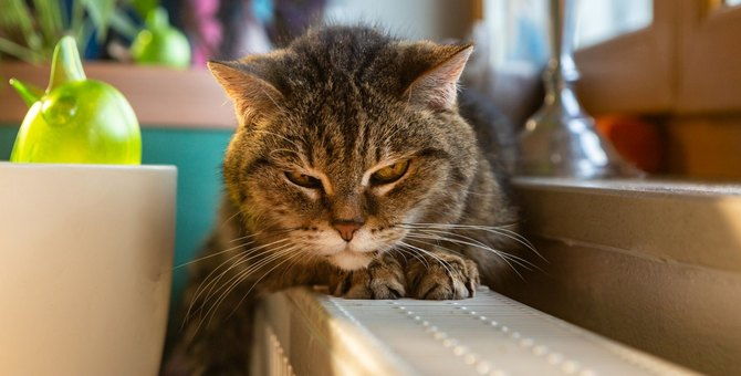 猫に『ごめんなさい』を伝えたい時にすべき3つのこと