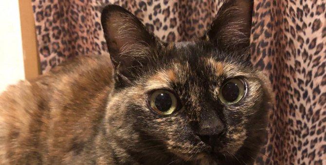猫が『大好きな場所』ランキングTOP5!その理由や注意ポイントを解説