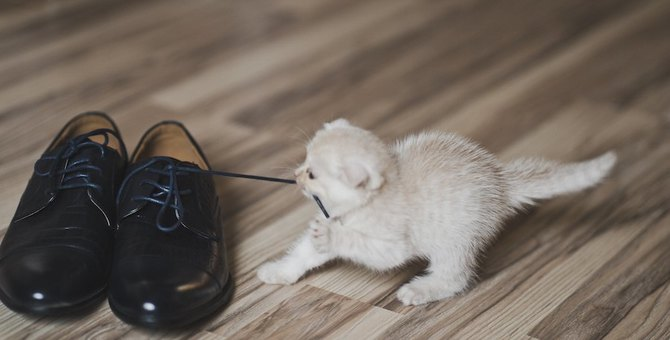 猫はどうして飼い主の靴が好き?6つの心理