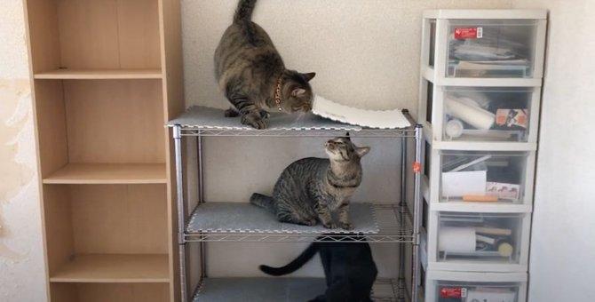 仲良く棚に収納される猫ちゃんたち♪