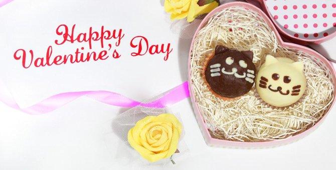 今日はバレンタイン!猫に愛を伝える6つの方法