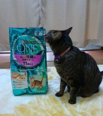 我が家の猫のお気に入り♡シニアの猫ちゃんにおすすめ!「ピュリナワン11歳以上腎臓健康サポート」
