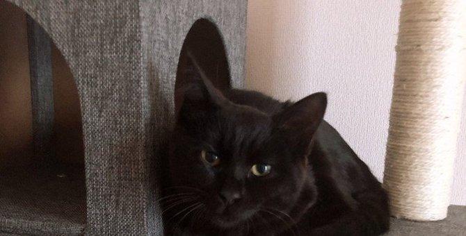「本当は規則正しく生活したい」猫のために、気をつけるべきポイント3つ