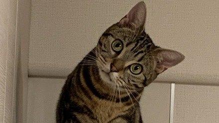 猫の知識を勉強するメリット4つ