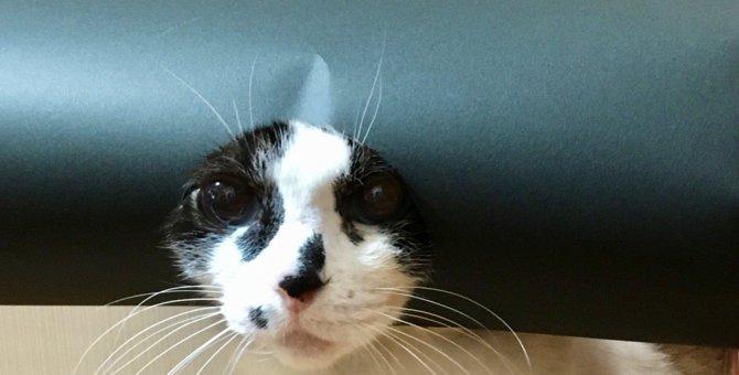 『にゃんにゃんとう』!恵方巻きに変身した猫がTwitterで大人気♡