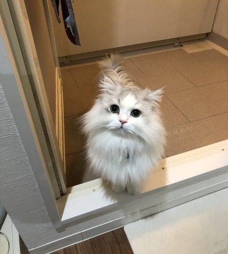 猫にお風呂は絶対必要?シャンプー頻度とコツ3つ