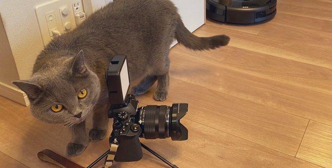 一流モデル猫さんを写真に撮る名カメラマンな猫さんがツイッターを席捲!