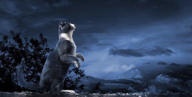 猫の不思議な能力4つ!神秘的な出来事や体験談