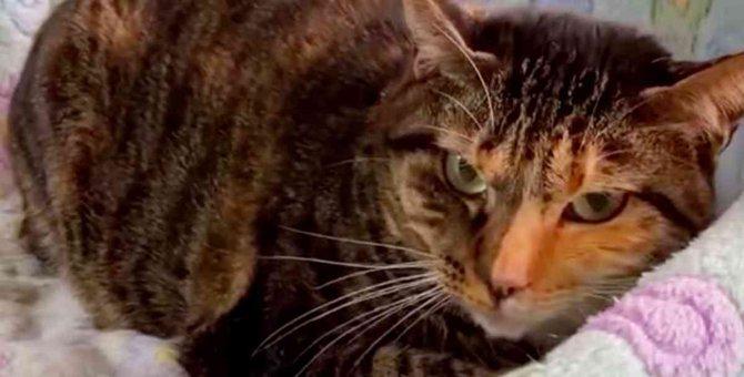 首を噛まれた瀕死の子猫…危篤を乗り越え奇跡の回復!