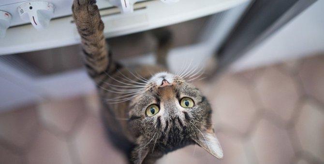 猫の怪我を招く『家の危険スポット』3つ