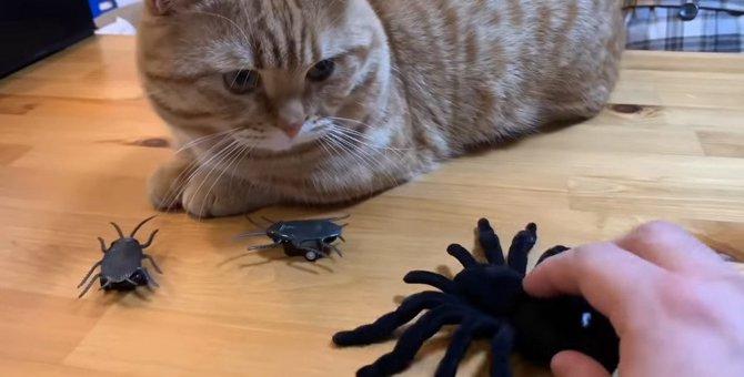 鋼の心を持つ猫ちゃん