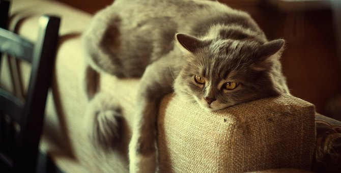 猫はとても我慢強い動物!見逃せない6つのストレスサイン