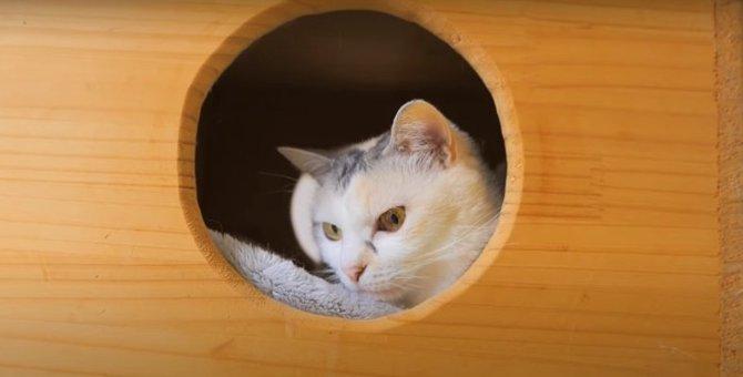 猫ちゃん専用BOXと…密かな夢♡