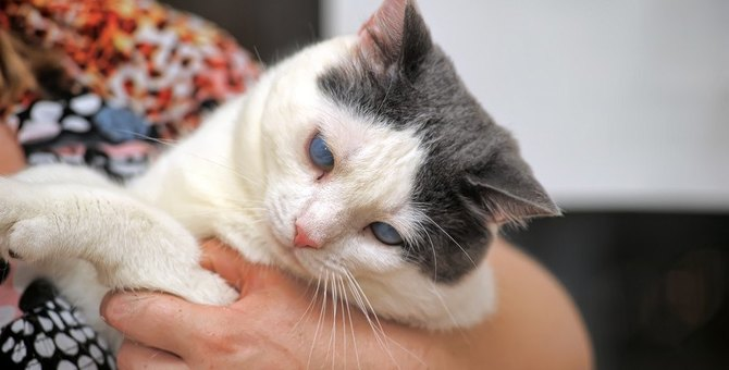 認知症にかかる猫が急増中。原因と治療法を知って備えよう