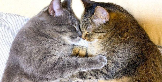 『2頭目の猫』を飼いたい…決める前に知っておくべき注意ポイント3つ