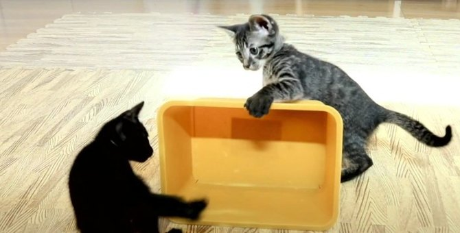 子猫ちゃん達に愛される魅惑の箱バトル!