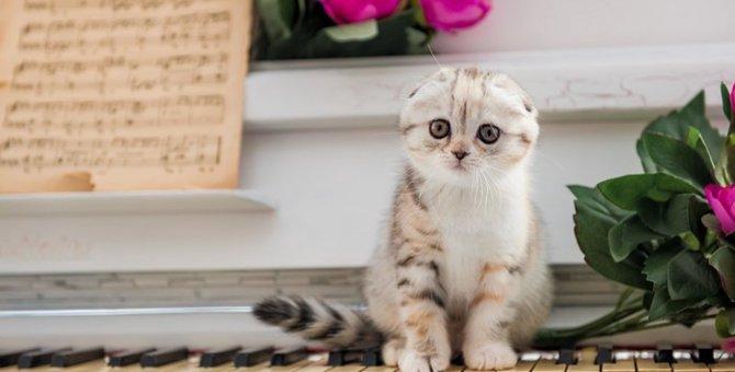 垂れ耳の猫が今後いなくなる?抱えた繁殖の問題とは