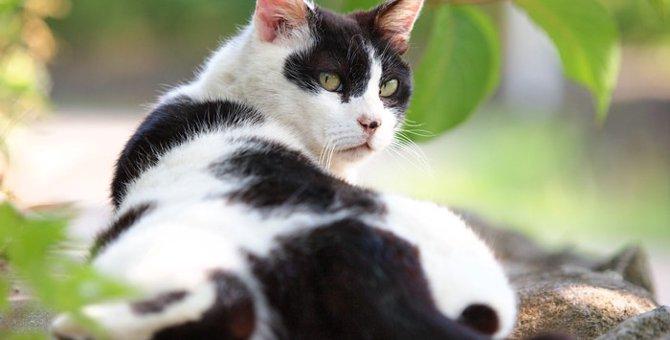 白黒の猫の特徴や性格、飼い方について