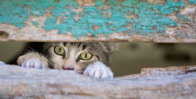 猫が身の危険を感じた時にする行動5つ