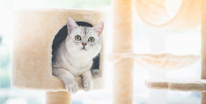 猫に配慮したお部屋とは?模様替えする時注意したい4つの事