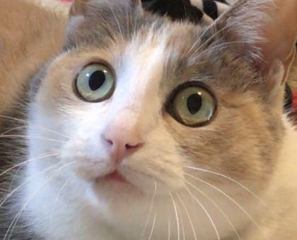 シニアになった愛猫!食事を見直してみませんか?
