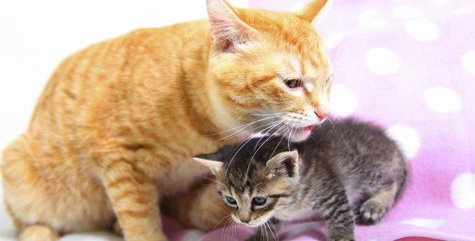 猫が『髪の毛』を食べる3つの理由!注意すべきデメリットと対策は?