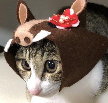 来年の干支はイノシシ!猫のかぶりもので新年のご挨拶♡