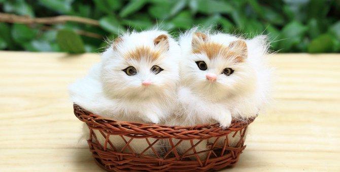猫もひな祭りが大好き!イタズラ4つと対処法