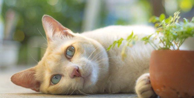 猫に現れる「愛情不足」のサイン3つ