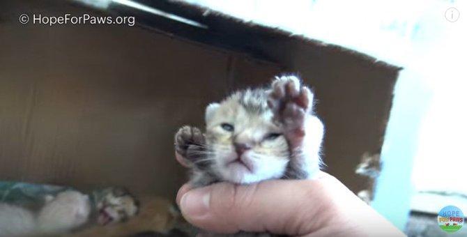 こんなにスムーズでいいの!?母猫と生後1週間程度の子猫たちの保護