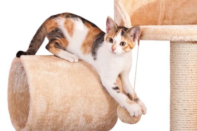 猫のためのアスレチック!おすすめ商品と自作の方法