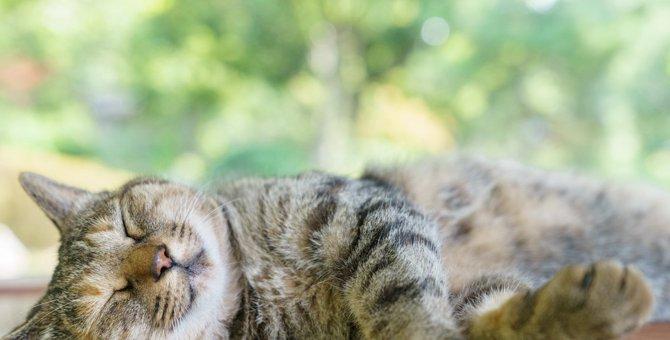 猫にとって快適な『夏の部屋作り』のポイント5選