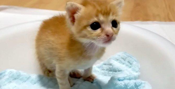 生後10日だった子猫の成長ぶりに感無量