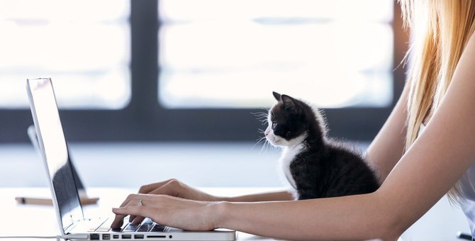 猫にとって『在宅勤務』がストレスになる3つの理由!飼い主が取るべき対策とは?
