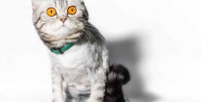 猫を驚かせてしまう『NGアイテム』5つ