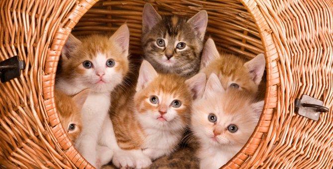 おしゃれな猫ケージの選び方とおすすめ商品