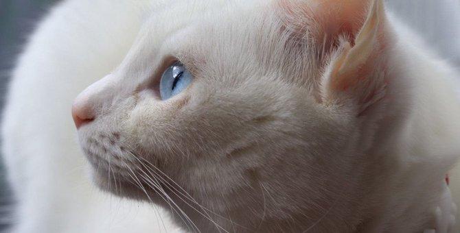 愛猫をより美しく♡猫を『夜の室内』で上手に撮影する方法3つ