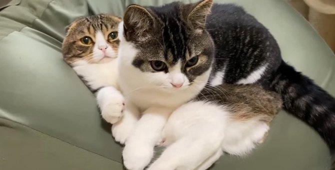 大きくなってもパパ猫の上に乗る甘えんぼう猫ちゃん♡