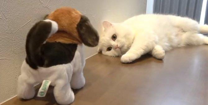 犬の動くおもちゃを目にしたポムさんの反応は?