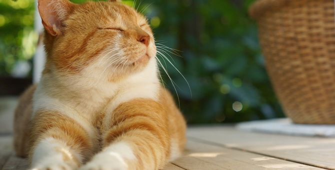 猫が暑い時の涼み方5つ