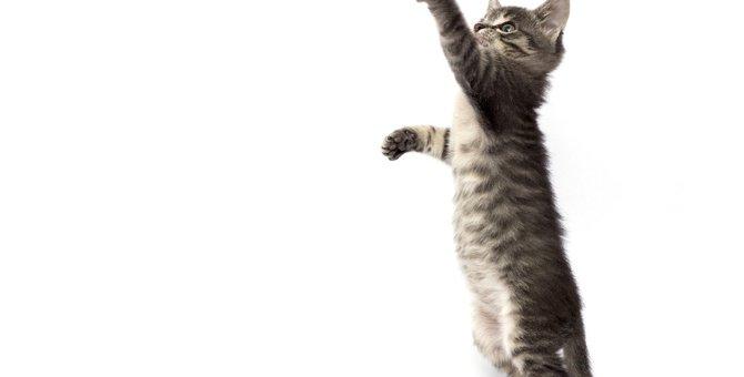 猫が『二本足で立つ』ときの気持ち4つ