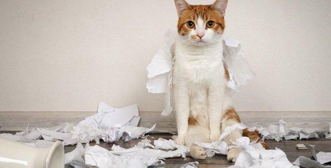 猫のしつけで感情的になりそうな時の3つの対処法