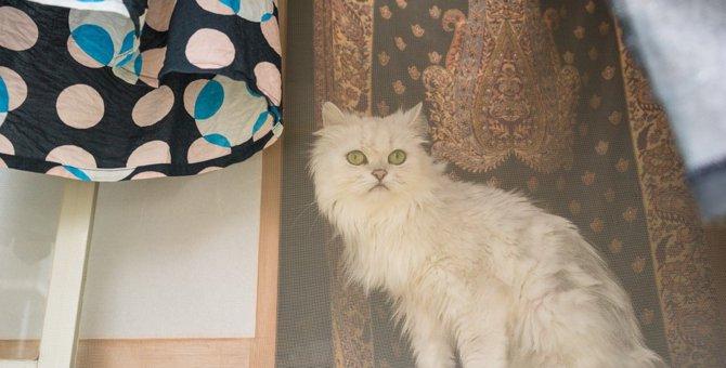 猫に留守番させるための準備や大切なこと