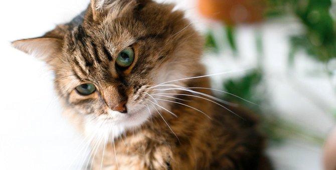 猫が飼い主に甘えない5つの理由!甘えてもらう方法まで