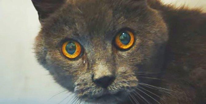 ゴミ袋で遺棄された老猫…悪質な事件に警察が動く!
