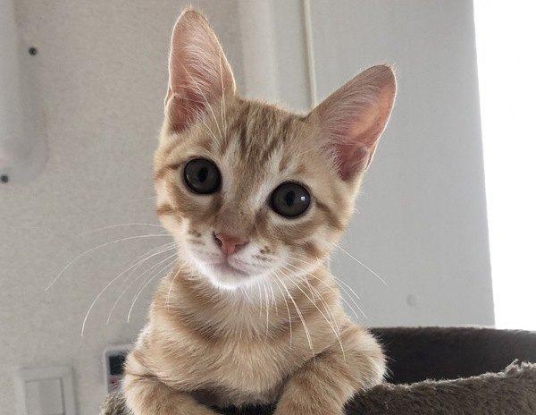 猫にとって「良い人」ってどんな人?